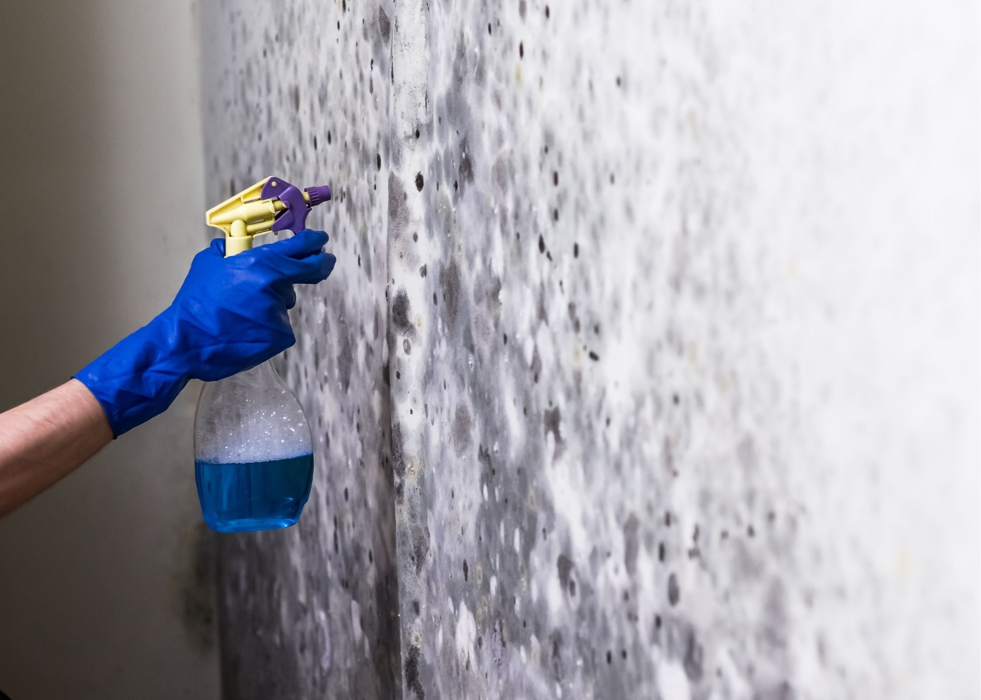 mold removal in Seattle WA