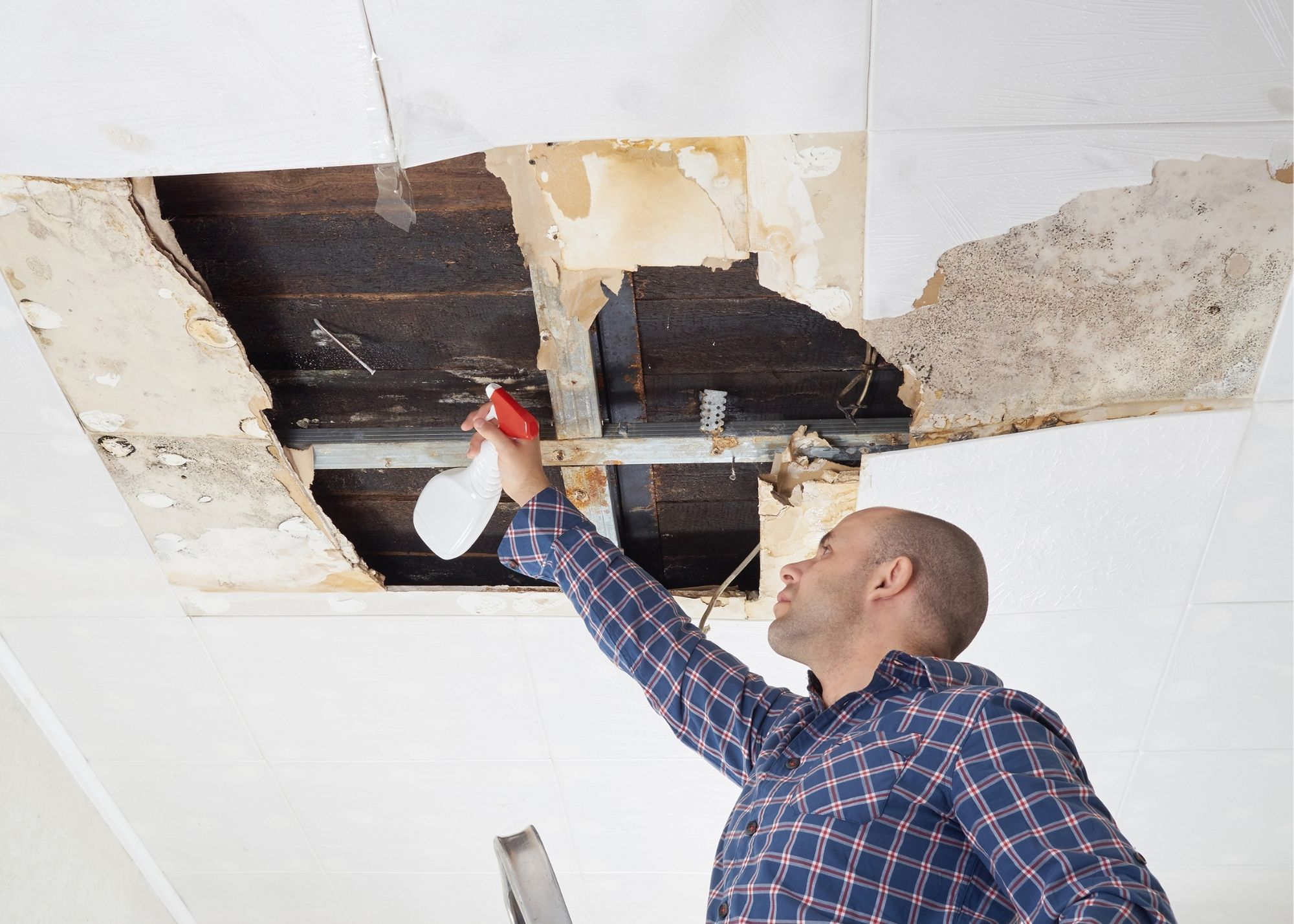 mold removal Seattle
